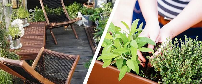balconi-e-case-di-citta-come-avere-un-giardino-di-erbe-aromatiche-anche-in-un-palazzo